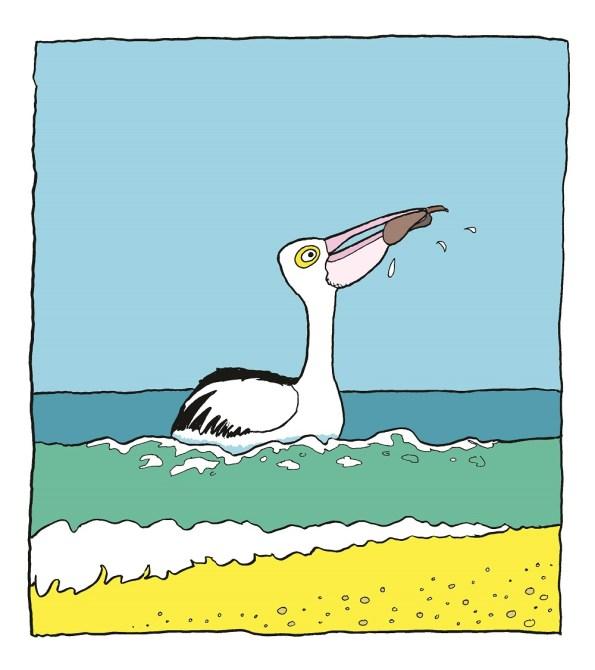 Pelican fishing at Bribie