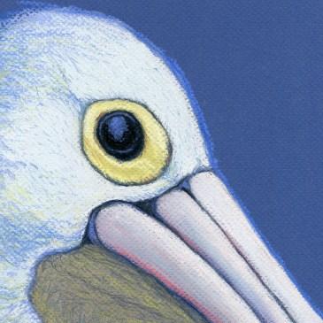The wisdom of pelicans