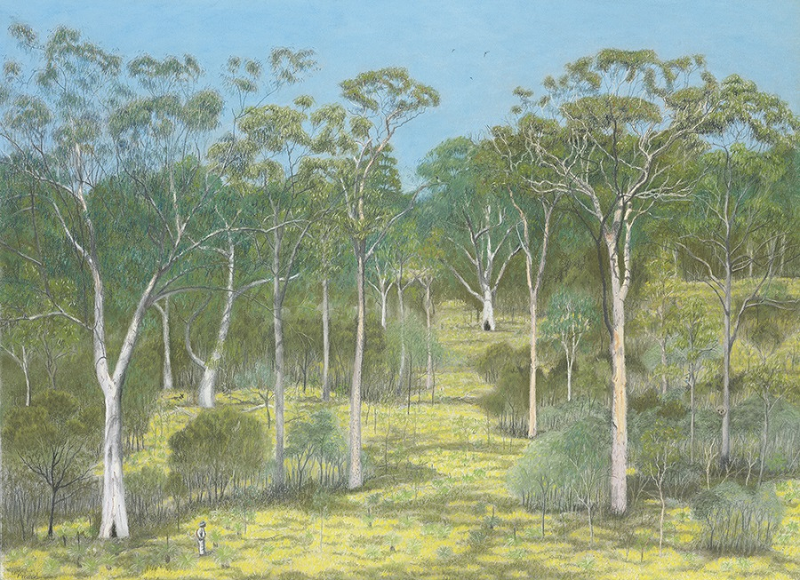 Scribbly gum woodland at Freshwater (pastel)