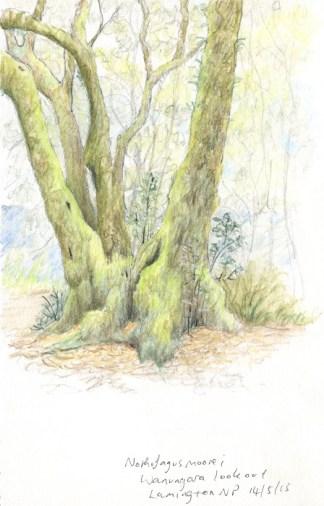 Notho sketch