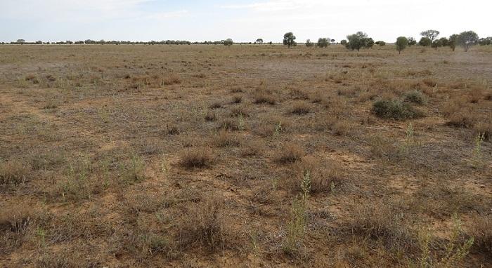 red clay grassland