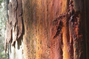 trunk-colours