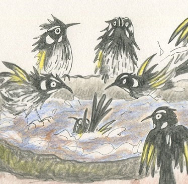 Drawing birds in Adelaide
