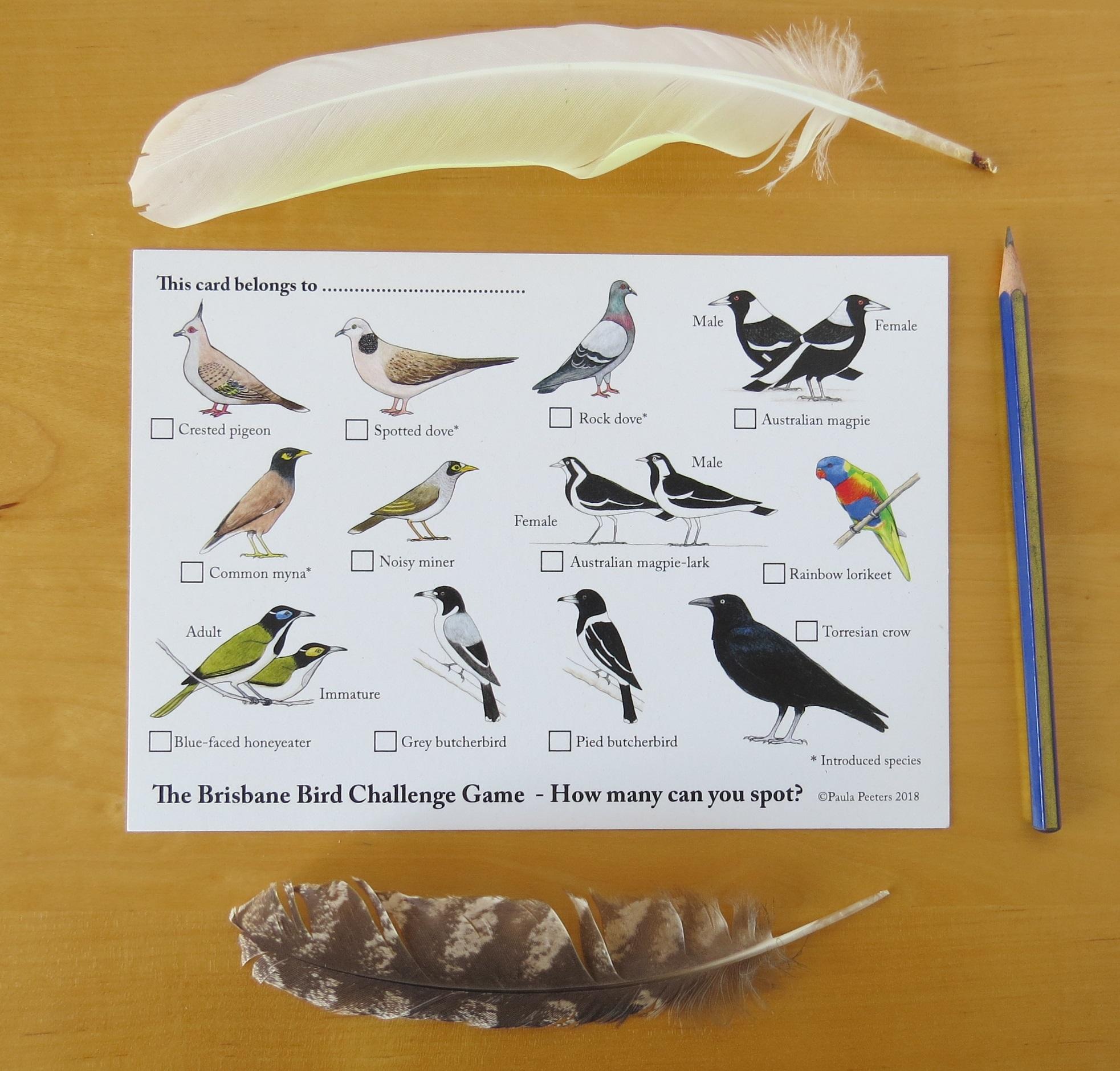 Brisbane Bird Challenge Game Card Paperbark Writer