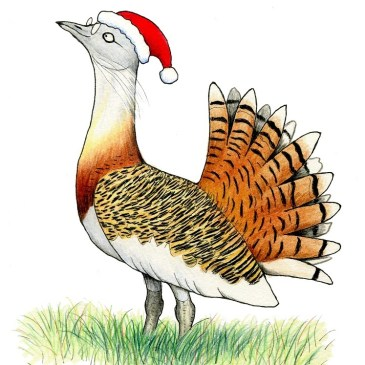 Bustard love goes to the UK