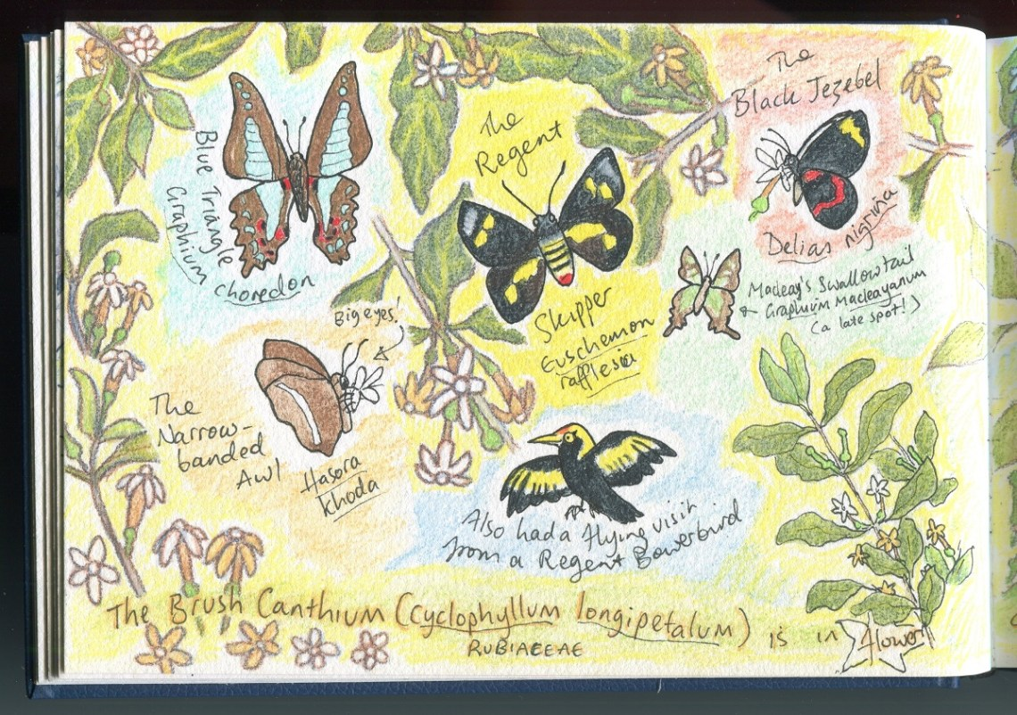 butterflies jan 2019001small