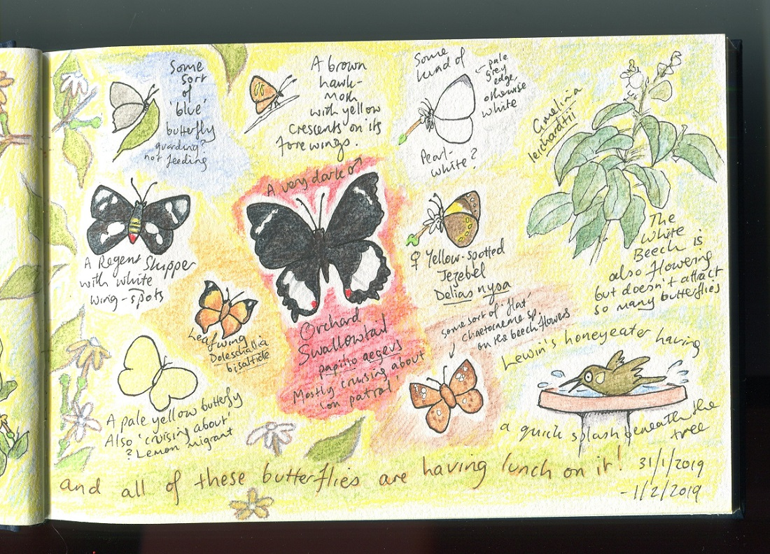 butterflies jan 2019002small