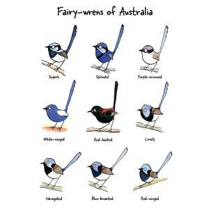 Fairy-wrens of Australia organic cotton tea towel