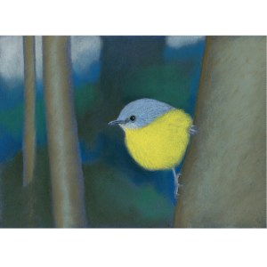 Eastern yellow robin card