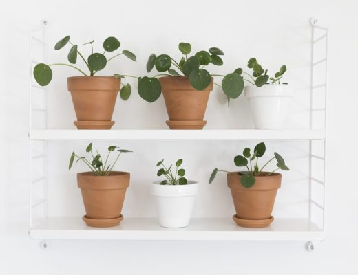 DIY - Boutures Pilea - www.paperboat.fr