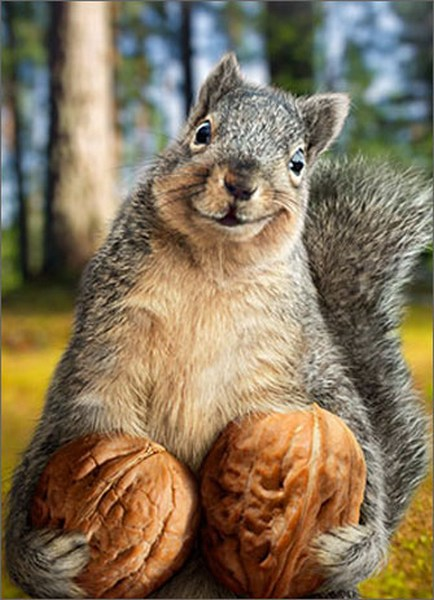 Squirrel Holds Nuts Funny Humorous Birthday Card By