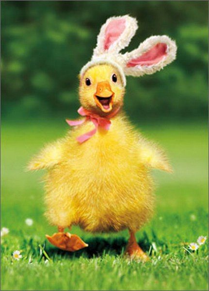 Duckling Bunny Funny Humorous Easter Card By Avanti Press