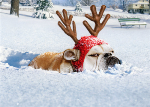 Bulldog Reindeer Stand Out Pop Up Funny Humorous