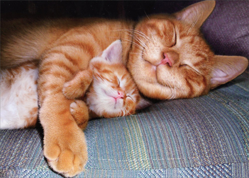 Napping Mom Cat And Kitten Mothers Day Card By Avanti Press