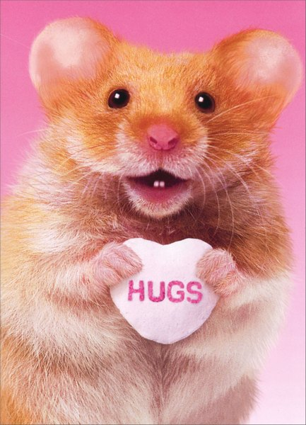 Hamster Hug Funny Humorous Valentines Day Card By