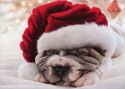 Wrinkly Dog In Santa Hat Box Of 10 Avanti Shar Pei
