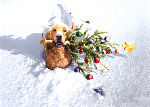 Dog With Tree In Snow Box Of 10 Funny Christmas Cards By