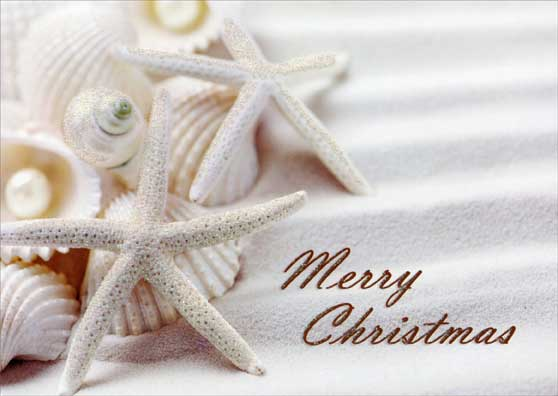 White Starfish And Shells Tropical Christmas Card By LPG