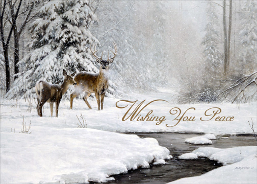 Dear And Stream In Winter Box Of 18 Nature Christmas Cards
