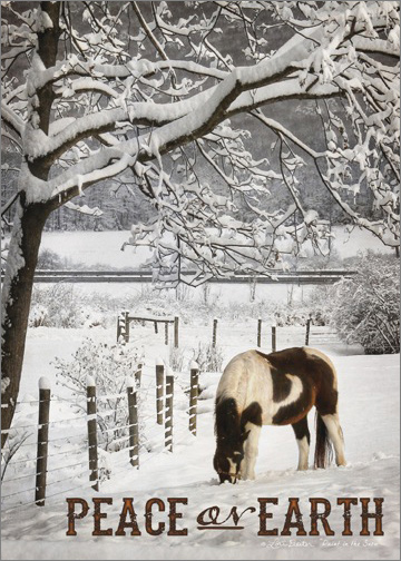 Brown And White Horse In Snow Lori Deiter Country
