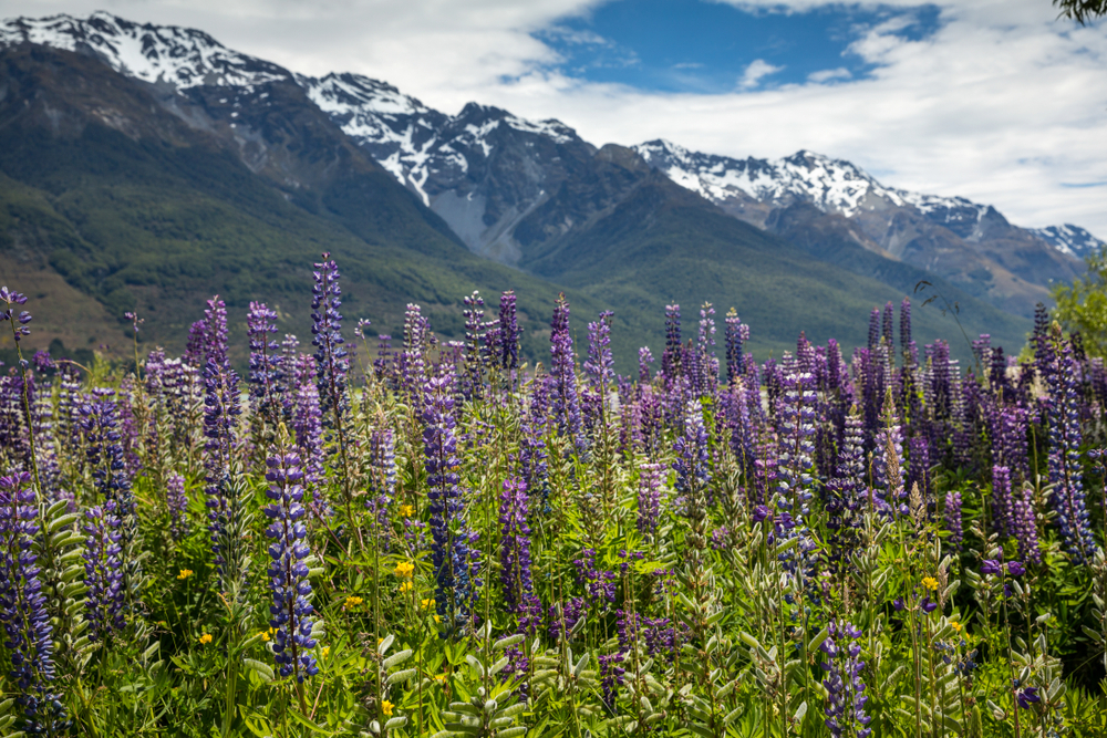 Why should you plan a romantic getaway in New Zealand? It's got incredible food and wine, great scenery, exciting and exclusive adventures, and some ...