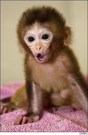Monkey Princess (@MonkeyPrincess6).jpg