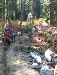 trail-ride-in-the-forest-vertr_fitbox_350x500