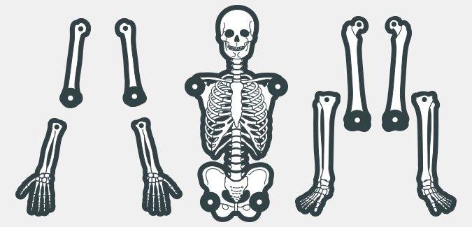 picture regarding Skeletons Printable called Establish your particular skeleton - PAPERZIP