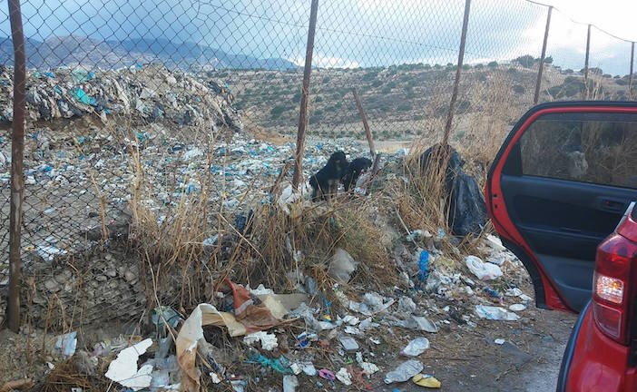 Two puppies in the local garbage dump were spotted by Takis rummaging through garbage bags