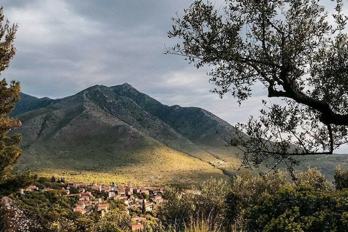 Experience the Olive Harvest in Mani
