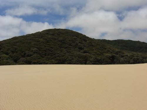 day3-sanddunes-forest