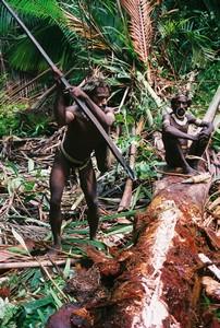 Korowai & Kombai – Papua Tree people (5/6)