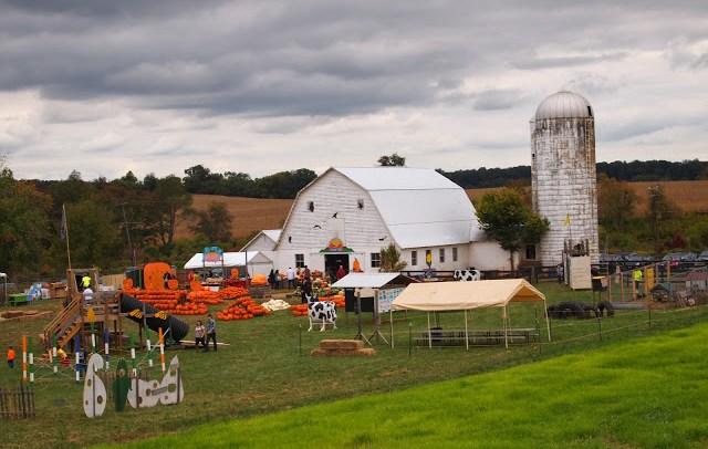 amerykańska farma