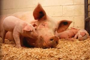 Tipos de reproducción de los animales, vertebrados e invertebrados.