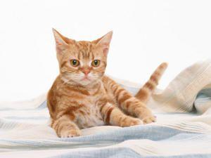 Beneficios de los animales y mascotas