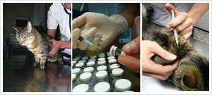 Vacunas para mascotas o animales de compañía