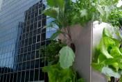 Pflanzen im Hochhaus