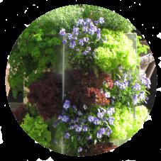 Kompostierung mit Pflanzen auf Balkon und Terrasse
