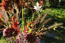 Blumenstrauß Herbstgrüße aus dem Paradiesgarten Maag (3)