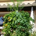 Vertikales Gemüsebeet