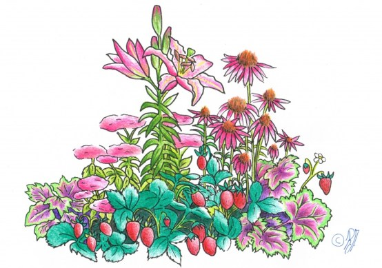 Illustrationen von Rebekka Maag