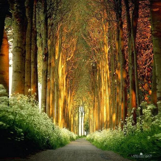 tree tunnels Tree Tunnel in Netherlands