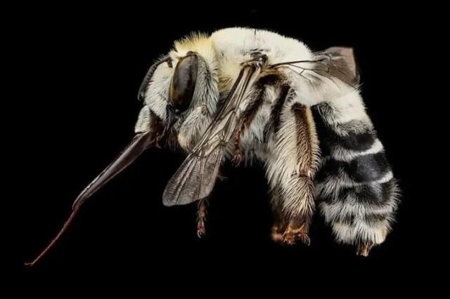 bijen4