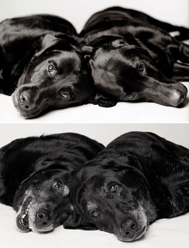 hondenjaren
