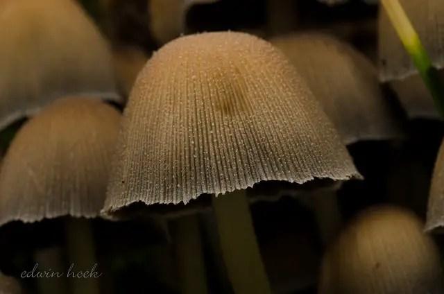Beeld: Edwin Hoek via Flickr.com