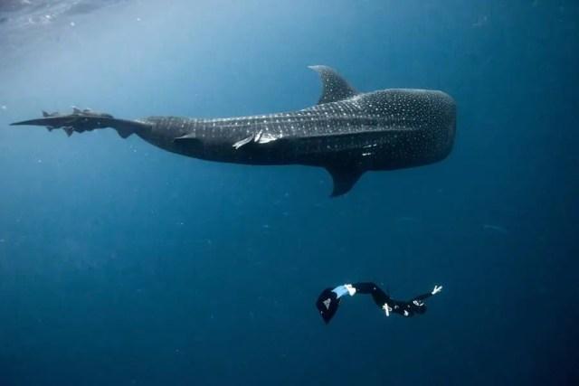 Oog in oog met een walvis | Paradijsvogels Magazine