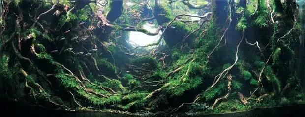 Onderwaterkunst in de mooiste aquaria ter wereld | Paradijsvogels Magazine
