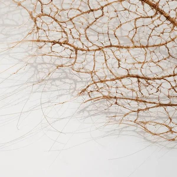 Delicate boombladeren   Paradijsvogels Magazine