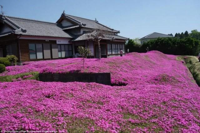 japanse man zaait bloemen6