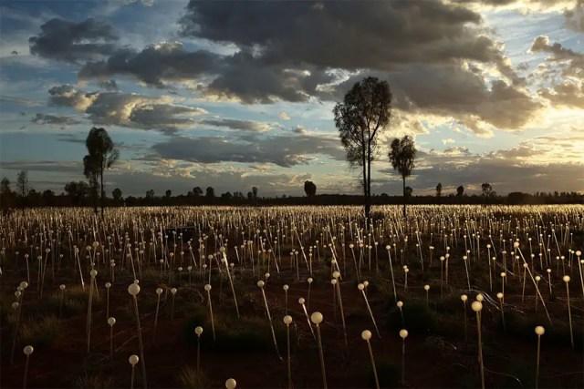 Bruce Munro - Field of light (7)